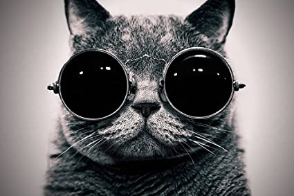 24x36 Inches Sunglasses Decor Poster Canvas Art On wall With Print Cat 0OZnkwXN8P