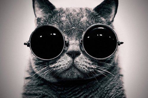 Cat With Sunglasses Art Print on Canvas,Wall Decor Poster 24x36 - Sunglasses Printing On