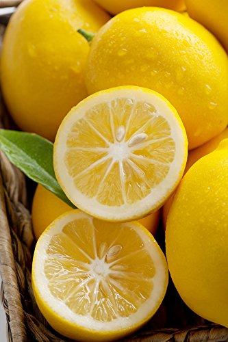 Dwarf Meyer Lemon Tree, Orange Hybrid Citrus (Excludes: CA,TX,LA,AZ) (Best Fertilizer For Meyer Lemon Tree)