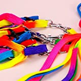 Pet Bird Harness and Leash with Buckle Adorable