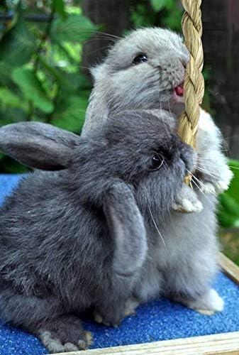 Conejos y Animales peque/ños Materiales Naturales no t/óxicos Made Terra Juguetes masticables para Conejos Paquete de 20
