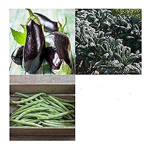 David's Garden Seeds Companion Set Eggplant 4563 (Multi) 3 Varieties 650 Seeds (Non-GMO, Open Pollinated, Heirloom, Organic) ()