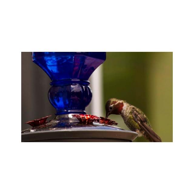 Perky Pet 8117 2 Cobalt Blue Antique Bottle Hummingbird Feeder, 16 Ounce  Pet Bird Feeders  Patio, Lawn & Garden