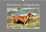 Rhodesian Ridgebacks 2016: High-quality photo calendar of Rhodesian Ridgebacks in their natural environment in South Africa, photographed by Anke van ... of the breed. (Calvendo Animals)