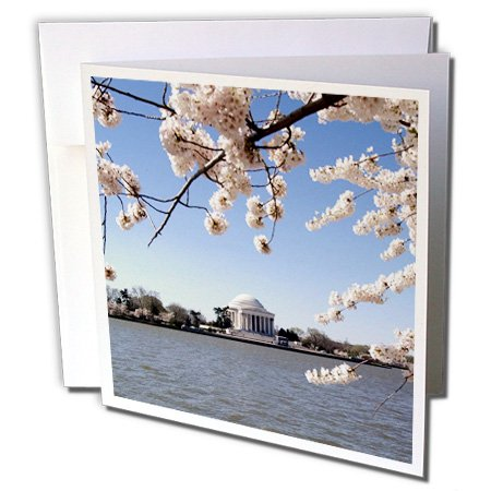 3dRose USA, Washington DC, Cherry Blossom, Jefferson Memorial - US09 LFO0182 - Lee Foster - Greeting Cards, 6 x 6 inches, set of 6 (gc_143525_1)