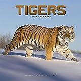 Tiger Calendar - Calendars 2018 - 2019 Wall Calendars - Animal Calendar - Tigers 16 Month Wall Calendar by Avonside