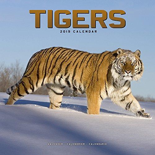 Tiger 2018 Calendar - Tiger Calendar - Calendars 2018 - 2019 Wall Calendars - Animal Calendar - Tigers 16 Month Wall Calendar by Avonside