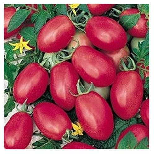 porter tomato - 4