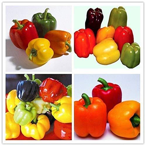 (Sweet Bell Mix Sweet Pepper Seeds [10 - Seeds])