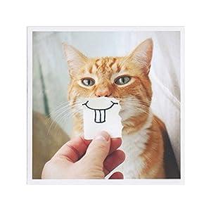 Cat Saying No Meme
