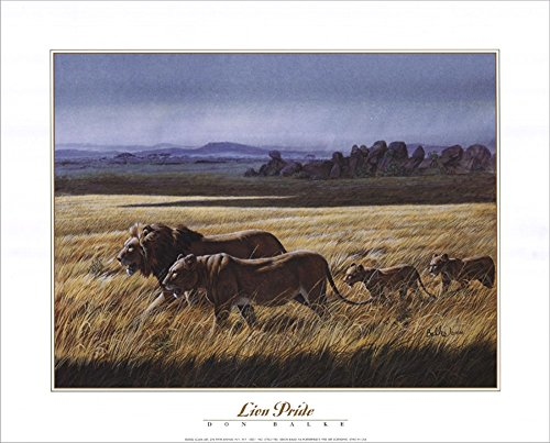 - Lion Pride by Don Balke Laminated Art Print, 20 x 16 inches