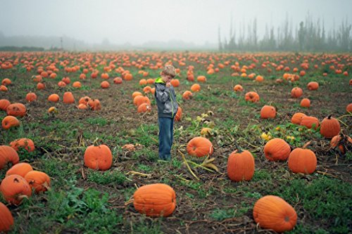 Young Boy Tries to Pick Out a Pumpkin Photo Art Print Poster 18x12 inch ()