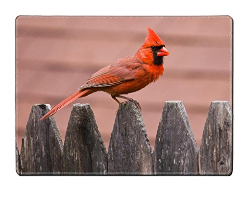 Custom Design Placemat, Unique Printed Dining Rubber Table Mat Designer for bird nature cardinal wildlife male red wing avian feathers feeder birds backyard songbird perched winter