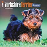 Yorkshire Terrier Puppies - 2014 Calendar