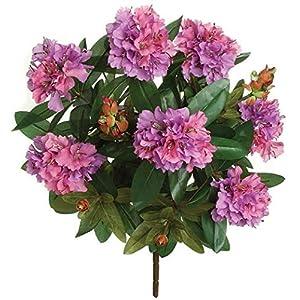 27 Inch Rhododendron Bush Signature Foliage 18