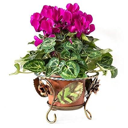 Maceta de hierro forjado, diseño de rosas y hojas Estante de decoración 13 cm: Amazon.es: Hogar
