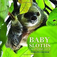 Baby Sloths Calendar 2019: 16 Month Calendar