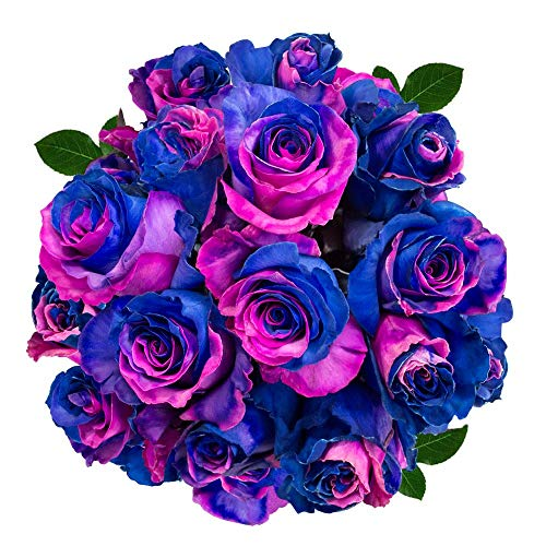 FRESH Tinted Roses| Blue and Fuchsia| 25 stems (Saturn Rose) Magnaflor - XXL Blooms| Bunch| 10-12 days vase Life by Magnaflor - Wholesale Roses & More