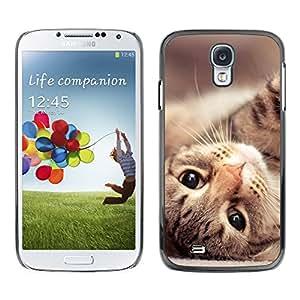 Maine Coon Cat American Shorthair - Metal de aluminio y de plástico duro Caja del teléfono - Negro - SAMSUNG Galaxy S4 IV / i9500 / i9515 / i9505G / SGH-i337