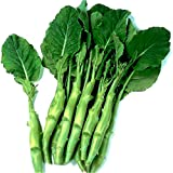 kailan Gai Lan Chinese Broccoli Kale 500 Seeds NON-GMO Heirloom Vegetable