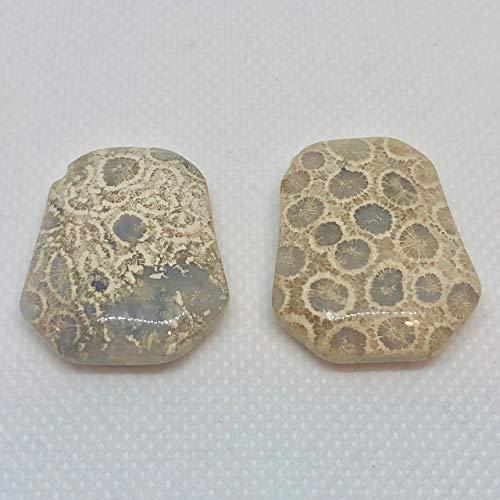 Fossilized Coral Pendant Beads! Pre-Cambrian Era! 6245A