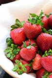Home Comforts Laminated Poster Strawberries Fruit Food Strawberry Red Healthy Poster
