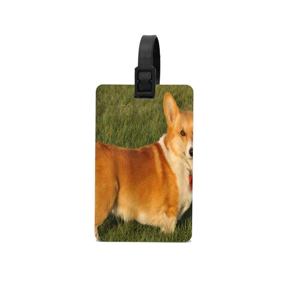 Amazon.com | ASLGlicenseplateframeFG Shining Corgi Luggage ...