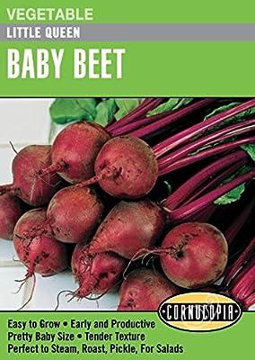 """Baby Beet """"Little Queen"""""""
