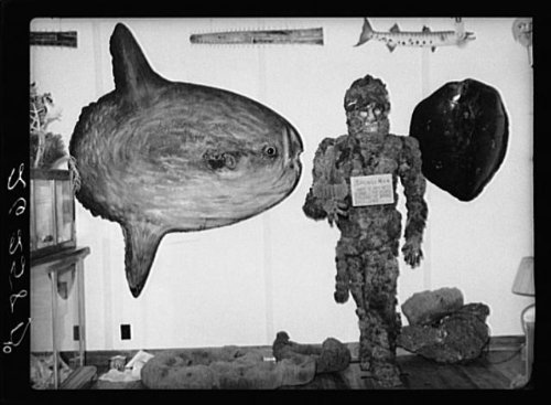 Photo: Exhibits in curio shop. Sunfish on left. Key - Key West Shopping In Best