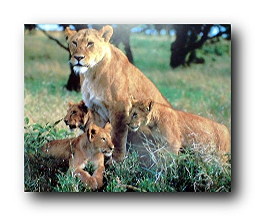 Buy wildlife posters 16x20
