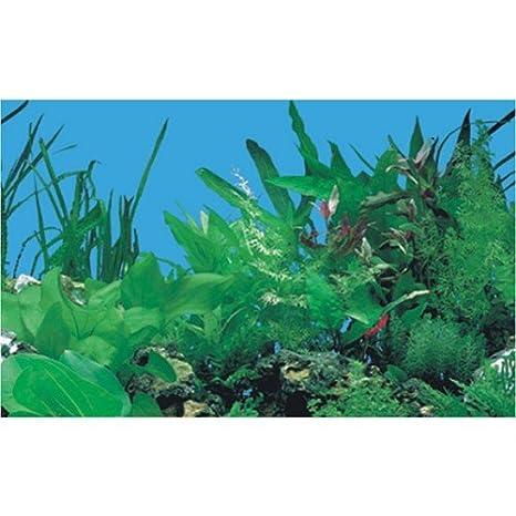 Plantas tropicales diseño de pecera de plástico - de fondo para acuarios 60 cm - ajuste de altura 60 cm, diseño de Jacqueline colley Solutions longitud ...