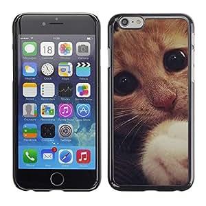 TopCaseStore / la caja del caucho duro de la cubierta de protección de la piel - Cute Sad Frightened Kitten Cat Paw Eyes - Apple iPhone 6