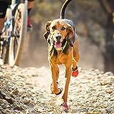 RUFFWEAR - Top Rope Dog Collar, Reflective Collar