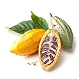 eroute66 40Pcs Cocoa Fruit Seeds Tree Germination Fresh Garden Plant