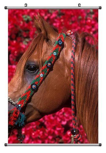 Brown Quarter Horse, Canvas Scroll Poster, Home Wall Deco Poster