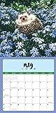 Adorable Hedgehogs 2020: 16-Month Calendar