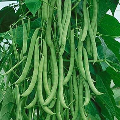 Pole Beans Amira Seeds (avg 30-50) Seeds 2 : Garden & Outdoor