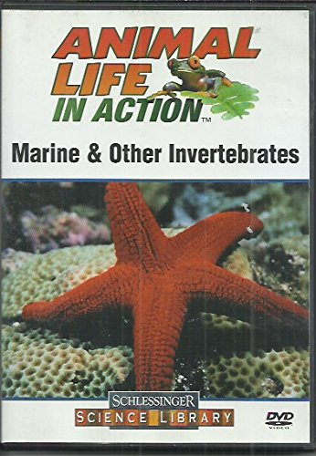 (Animal Life in Action - Marine & Other Invertebrates )