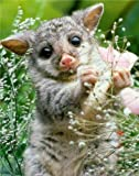 CUTE BABY WOMBAT GLOSSY POSTER PICTURE PHOTO animals funny cool cutie nature