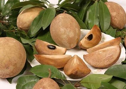 Amazon.com: manilkara sapota Chiku Rare exóticas fruta dulce ...