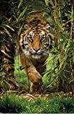 Bambo Tiger Photo Art Print Poster 24x36