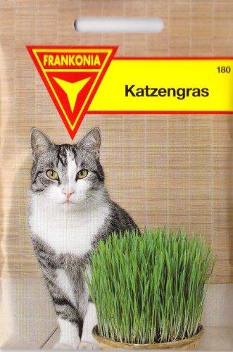 Katzengras, Avena sativa, ca. 3000 Samen