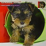 Magnet & Steel Yorkshire Terrier 2015 Wall Calendar