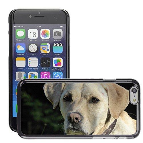 """Bild Hart Handy Schwarz Schutz Case Cover Schale Etui // M00133807 Hundeschnauze Kopf Haustier Tier // Apple iPhone 6 PLUS 5.5"""""""