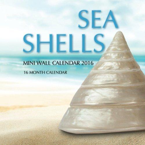 09 Seashell - 6