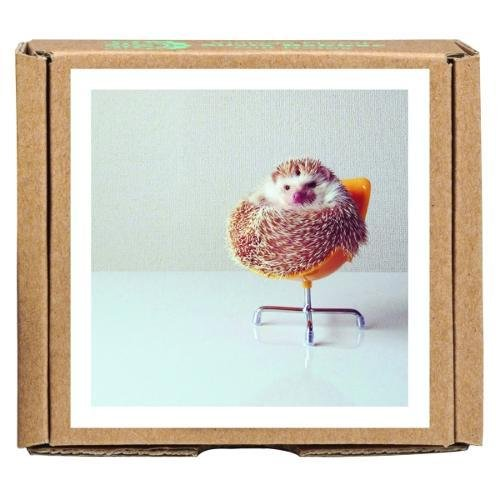 Darcy the Flying Hedgehog GreenGift-Notes, eco-friendly, all occasion boxed notecard set