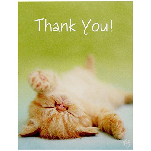 - BirthdayExpress Rachael Hale Glamour Cats Party Supplies - Thank-You Notes (8)