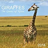 Giraffes - the Graces of Africa 2018: Follow These Majestic Animals Through the Savannahs of Africa. (Calvendo Animals)