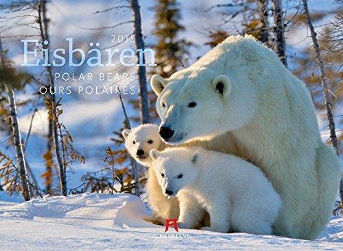Eisbären 2015