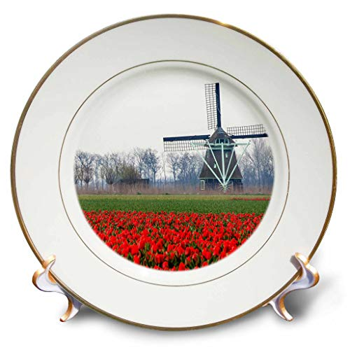 3dRose Danita Delimont - Netherlands - Netherlands, Old Wooden Windmill in a Field of red Tulips - 8 inch Porcelain Plate (cp_313775_1) ()